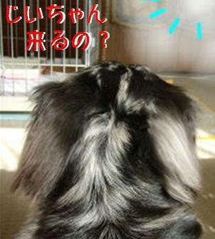 レンタル犬_f0195891_18141272.jpg