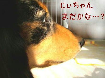 レンタル犬_f0195891_18271549.jpg
