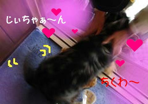 レンタル犬_f0195891_18303916.jpg