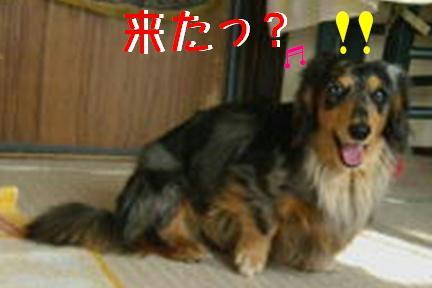 レンタル犬_f0195891_18321924.jpg