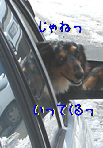 レンタル犬_f0195891_18411153.jpg