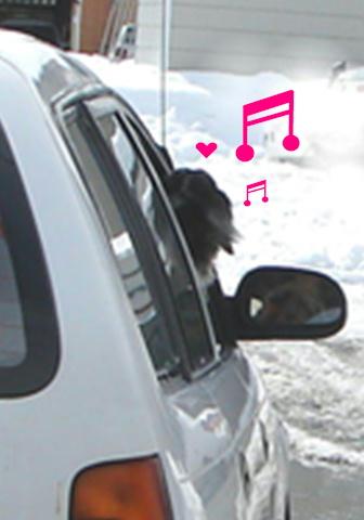 レンタル犬_f0195891_18414557.jpg