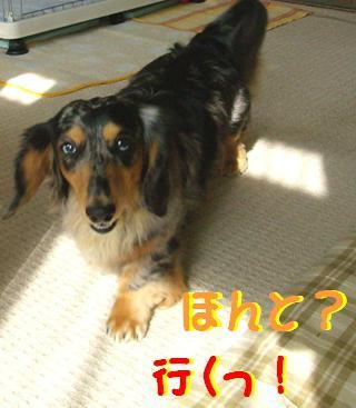 レンタル犬_f0195891_1845894.jpg