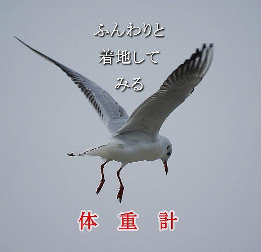 c0186592_1463776.jpg