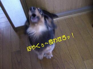 c0058727_2049457.jpg