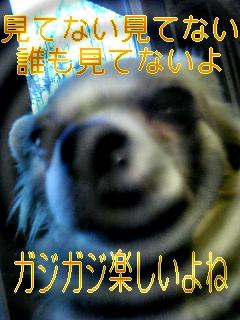 f0148927_19213454.jpg