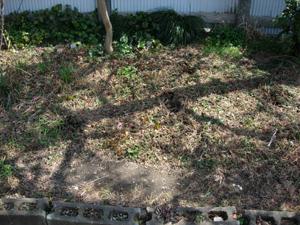 ネギ苗植え付けとトマト種まき_e0097534_11274012.jpg