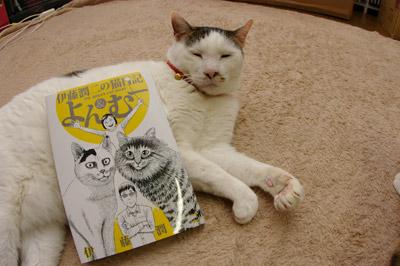 伊藤潤二の猫日記よん&むー _a0028451_2171970.jpg