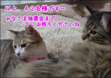 d0139352_1451941.jpg