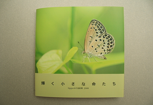 ■■Sippo☆の虫絵巻 ~vol.7~■■_c0195662_17553584.jpg