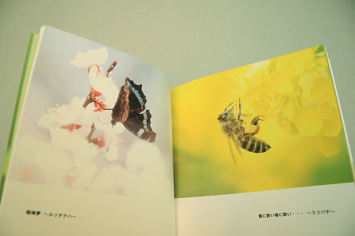 ■■Sippo☆の虫絵巻 ~vol.7~■■_c0195662_17554975.jpg