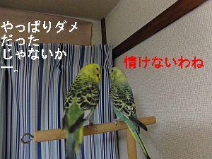 f0196665_047822.jpg