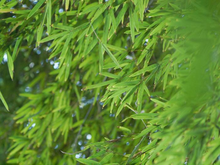 続いて、竹林の中も_c0036985_12421378.jpg