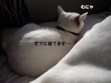 c0139488_16365117.jpg