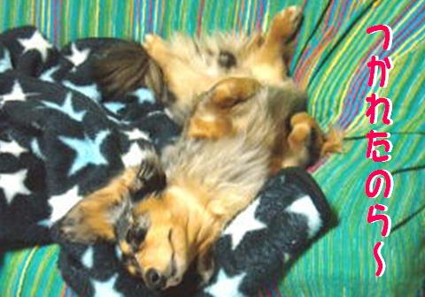レンタル犬_f0195891_15422694.jpg