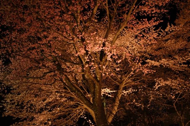 夜桜_f0091207_22531689.jpg