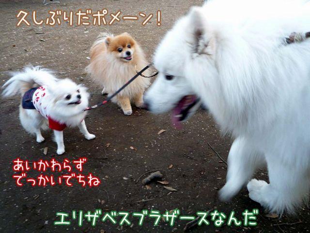 ゴキゲンおっきな公園_c0062832_1735917.jpg