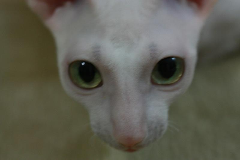 猫の目のように・・・_e0048332_22524577.jpg