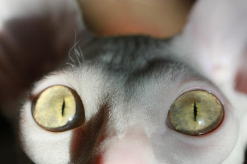 猫の目のように・・・_e0048332_2254252.jpg