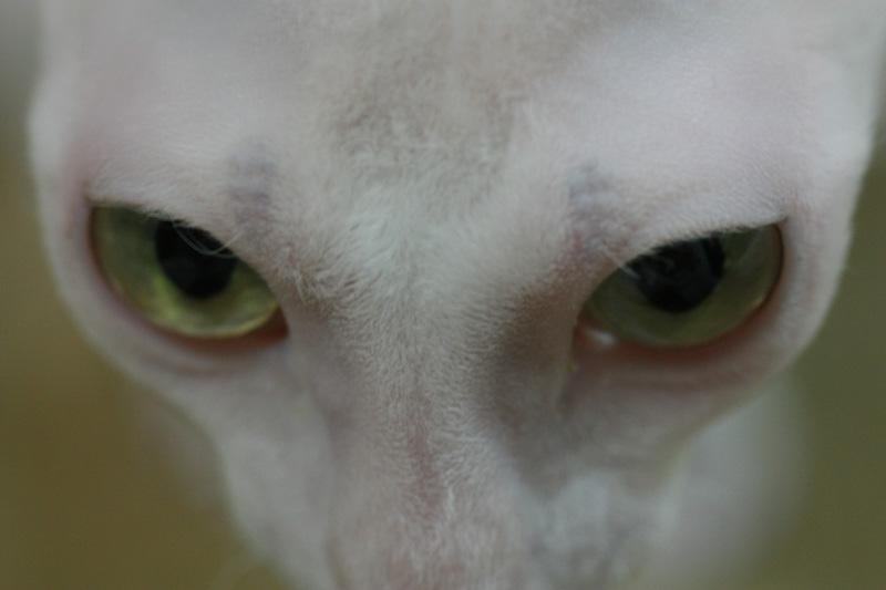 猫の目のように・・・_e0048332_23212951.jpg
