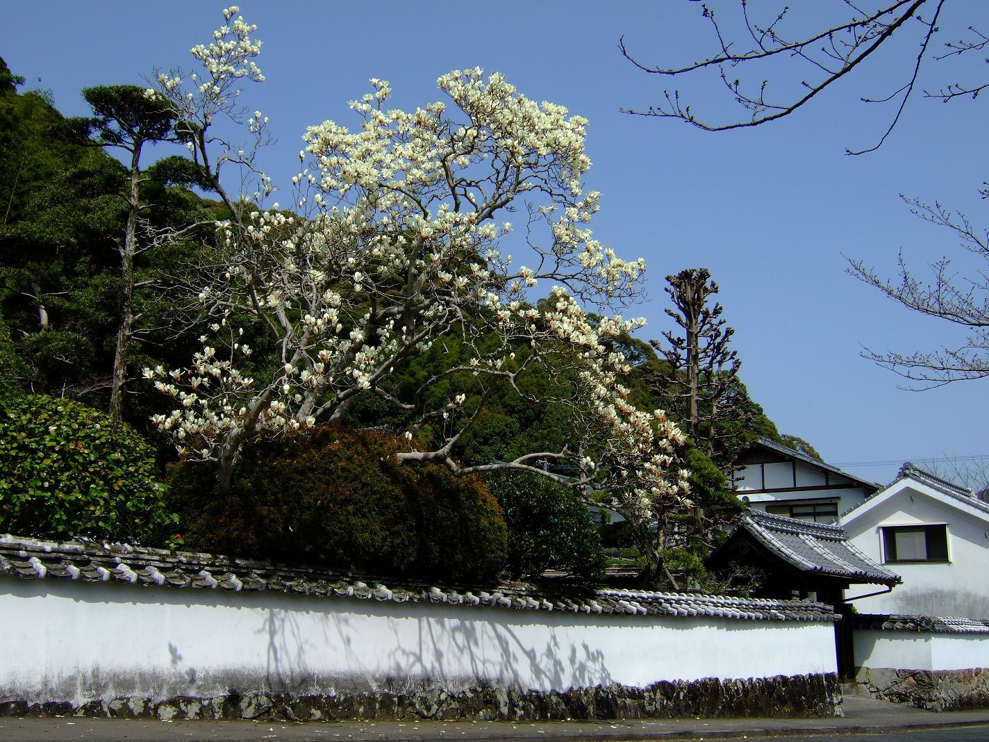 春 2009 Vol.1_c0038334_2138183.jpg
