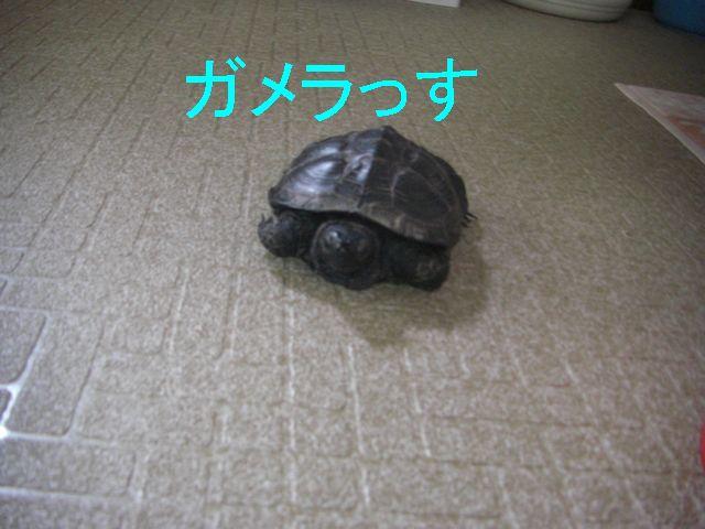 f0053952_17254712.jpg