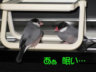 b0158061_20371919.jpg