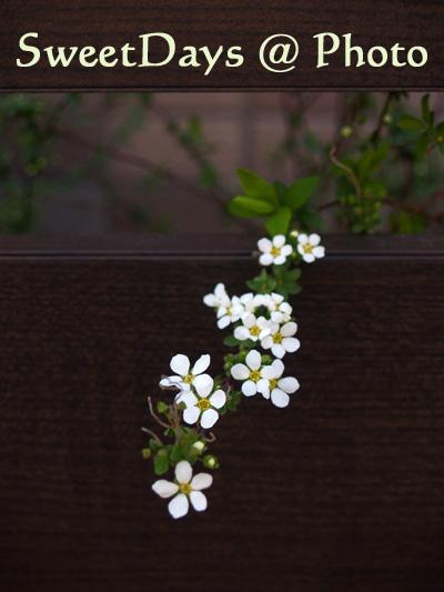 もうすぐ春ですね、_e0046675_2172255.jpg