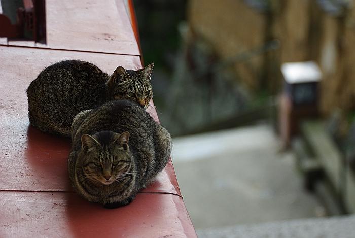 千光寺山の坂道と尾道猫_c0152379_21162381.jpg