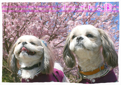 b0024183_2011614.jpg