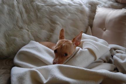 友達と過ごす日曜の午後。 「Coco et Olive」_d0129786_13294619.jpg