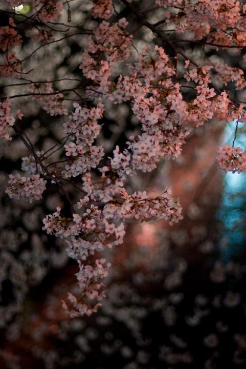 目黒川の桜。_c0120903_0255959.jpg