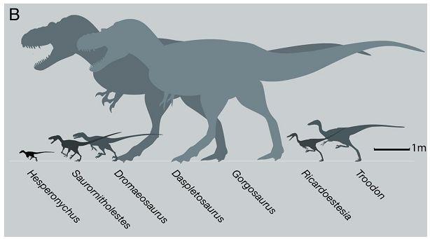 ネコサイズの肉食恐竜_c0025115_2101880.jpg