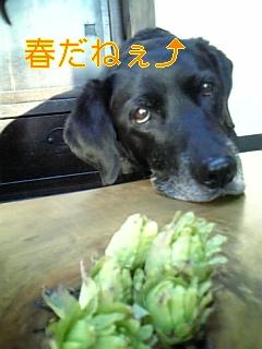 春ですぅ~♪_f0148927_18333688.jpg