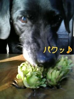 春ですぅ~♪_f0148927_18342045.jpg