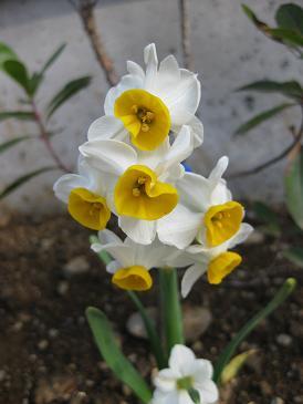 春の訪れ_c0178231_10481514.jpg