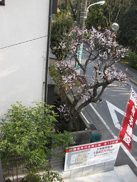 春の訪れ_c0178231_10521061.jpg