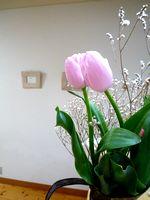 春が_c0199544_21104515.jpg