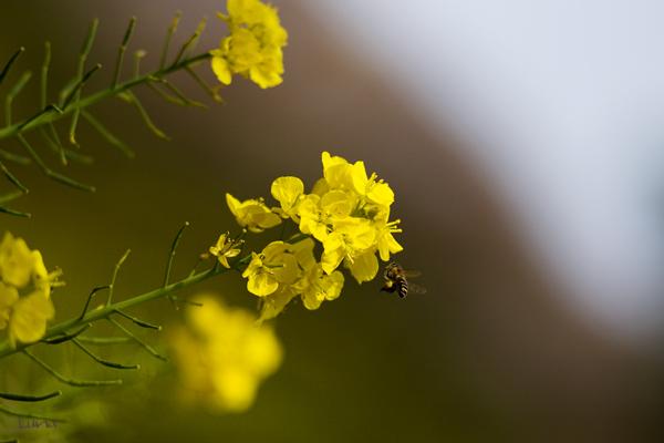 春の香り_c0165046_23494930.jpg