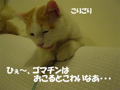 c0195250_1753181.jpg