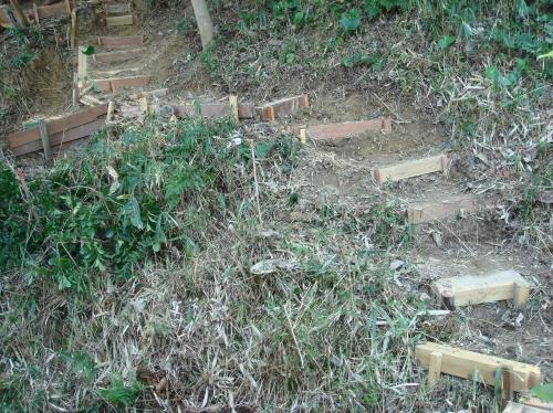 うみべの森での一人作業_c0108460_1618195.jpg