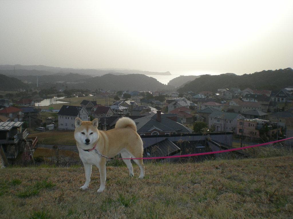 2009年3月17日(火)すっかり春!_f0060461_21131054.jpg