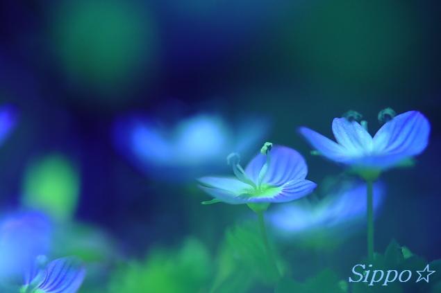■■Little Blue Dream■■_c0195662_1893014.jpg