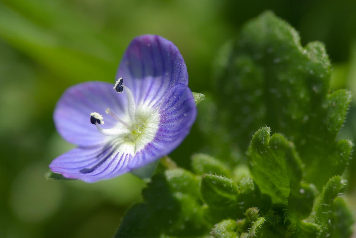 道端の小さな花を_d0123171_2255116.jpg
