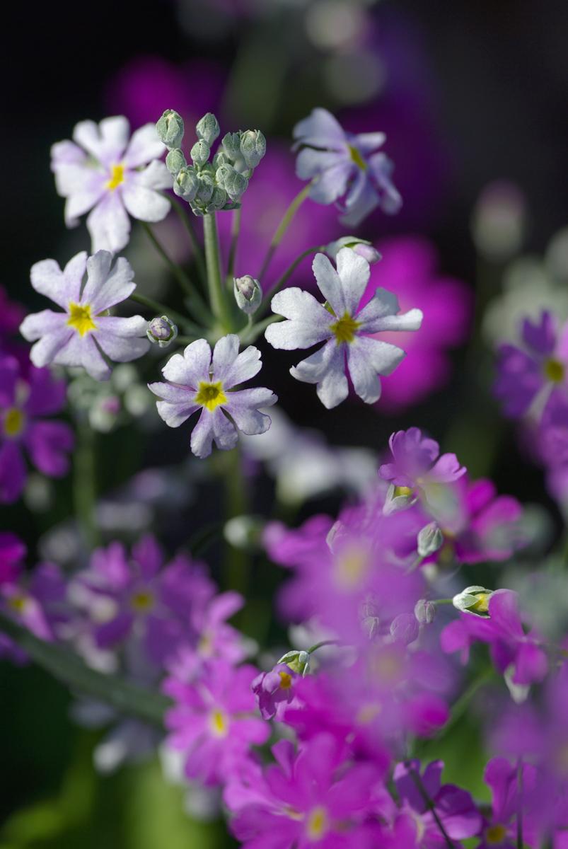 道端の小さな花を_d0123171_22552637.jpg