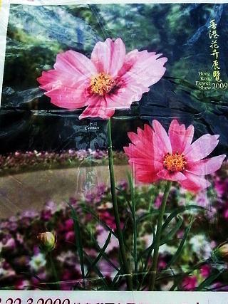 香港花卉展覧2009~HONGKONG FLOWER SHOW~_e0155771_20274296.jpg