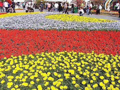 香港花卉展覧2009~HONGKONG FLOWER SHOW~_e0155771_20355812.jpg