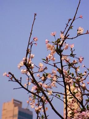 香港花卉展覧2009~HONGKONG FLOWER SHOW~_e0155771_2041536.jpg