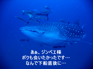 速報!!_f0144385_1218247.jpg