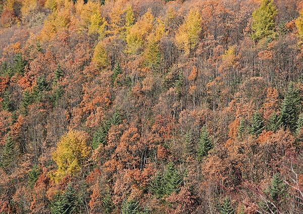 晩秋の展望台から_c0113597_1040169.jpg